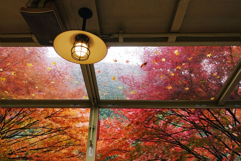 Fall Leaves Seen through a Window